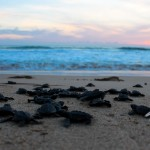 Liberación Tortugas Acuario 2609-17