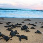 Liberación Tortugas Acuario 2609-18