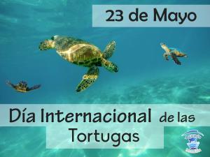Redes dia de la tortuga